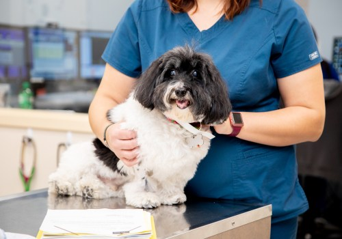 Internal Medicine, Carolina Veterinary Specialists in Matthews